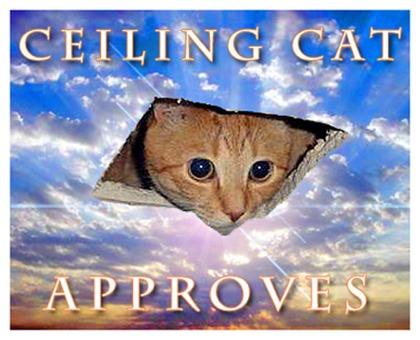 Ceilingcatapproves420x315px.jpg