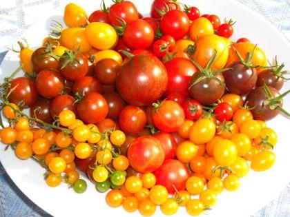 Cherry_tomatoes_8-08_420x315_00050.jpg